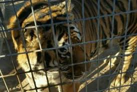 exotic-animals-seized