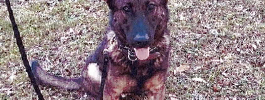 Police canine killed by suspect