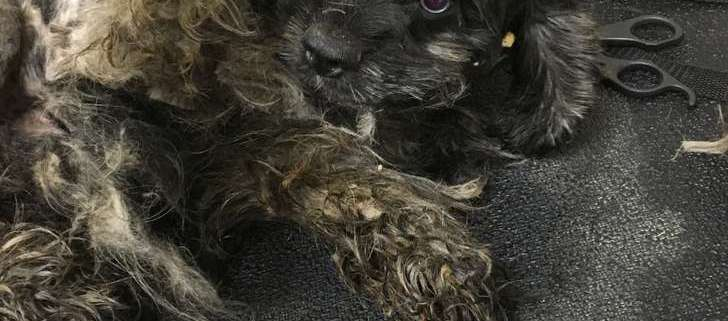 Dogs found in accused cruelty offender's home