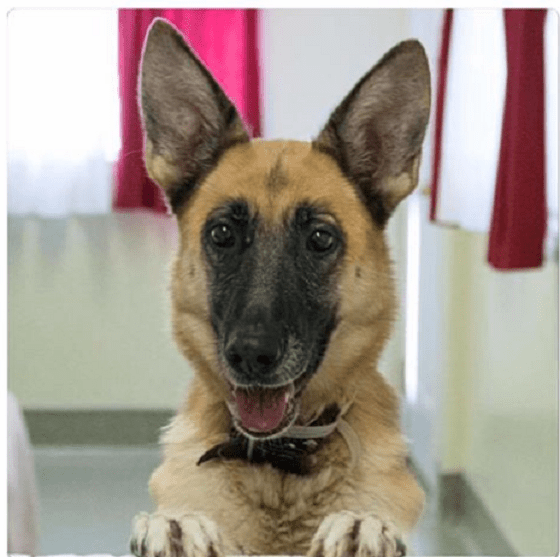 Homeless dog overlooked for months