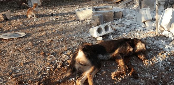 Shelter in war torn Aleppo struck