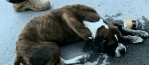 Skeletal dog found by police officer