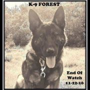 Police canine died from friendly fire