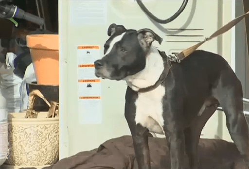 Teen saves his dog from house fire