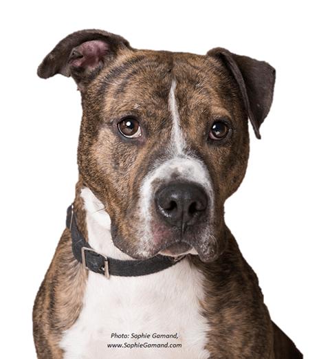 Arizona Search And Rescue Dogs