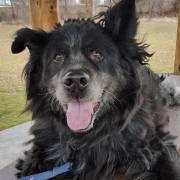 Senior dog homeless for over 5 years