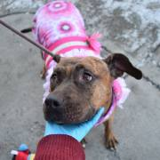 Angel needs to be saved from busy animal control
