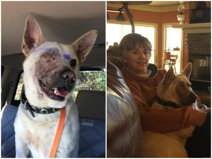 Dog lost eye after paintball attack