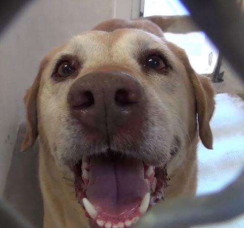 Senior dog - his family doesn't want him