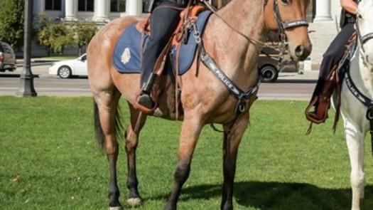 denver-police-department-horse