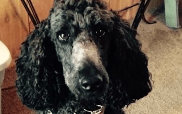 Dogs belonging to disabled veteran are missing