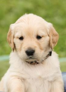puppy-1189023_960_720