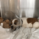 Puppy found with metal rod through skull