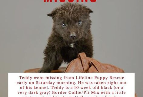 Puppy stolen from rescue group