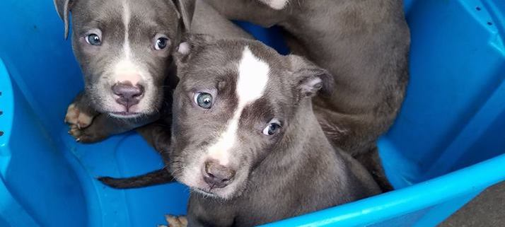Parvo puppies abandoned on highway