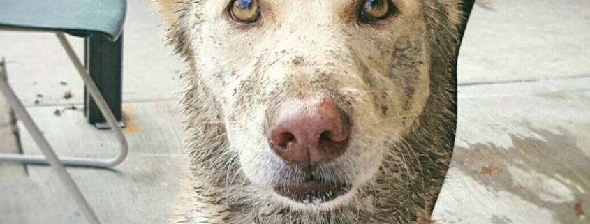 Senior dog has lost her family