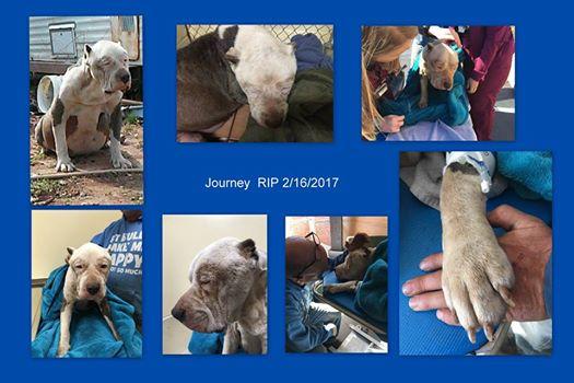 Tragic outcome for neglected dog