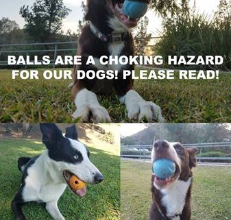 Dog nearly choked to death on a ball