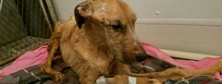 Couple charged in case of dog who was starved to death