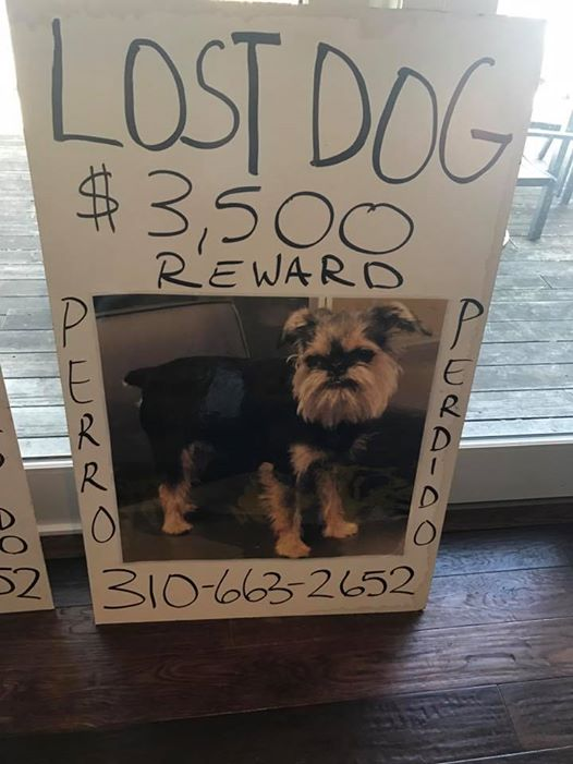 Couple puts wedding on hold to search for lost dog