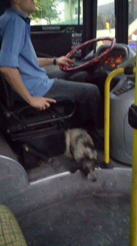 Home Pet Rescue Report