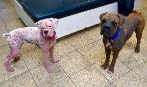 Pink dog abandoned 3