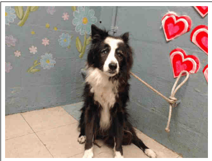 Senior dog dumped for being 'too old'