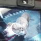 Dog put down shortly after arrival at Vegas shelter