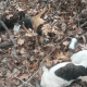 Seven dogs found shot to death
