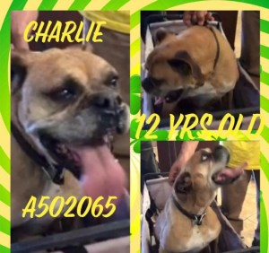 Charlie at SBC 2