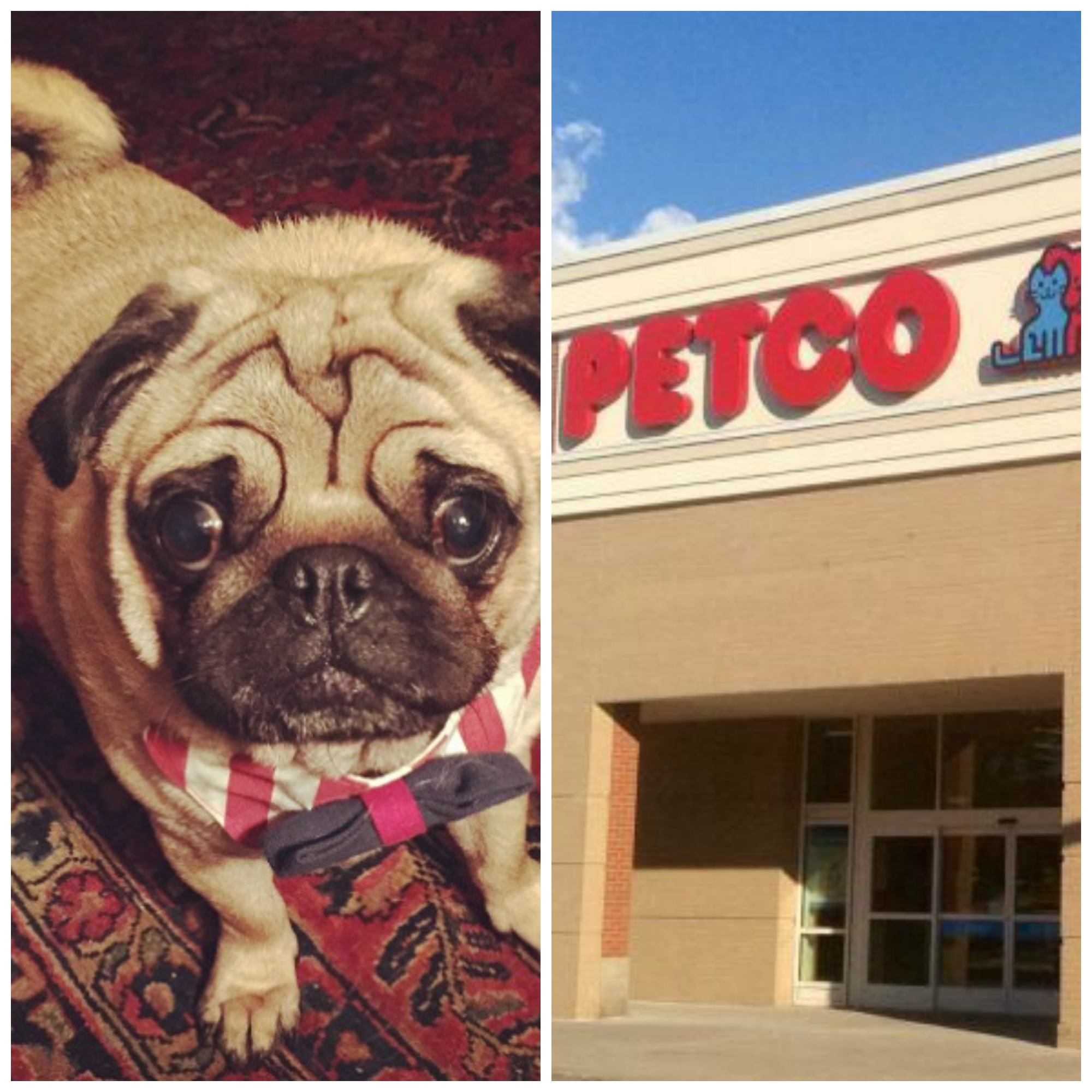What does petco background check look for