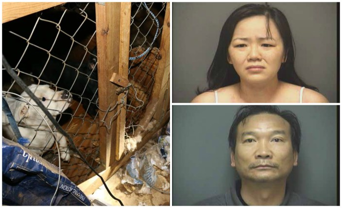 Couple facing cruelty charges for illegal breeding operation