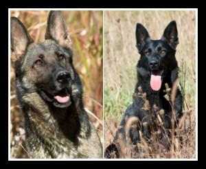 Two shepherds perished in deadly fire
