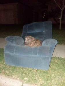 duke the couch dog cover