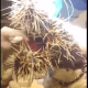 Graphic video and a veterinary warning