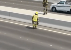 Traffic halted to rescue tiny kitten