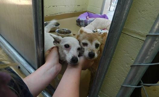 Senior dogs abandoned by owner
