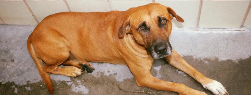 Fearful dog scheduled to die on Saturday