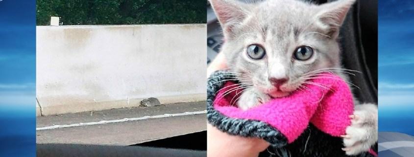 Kitten rescued