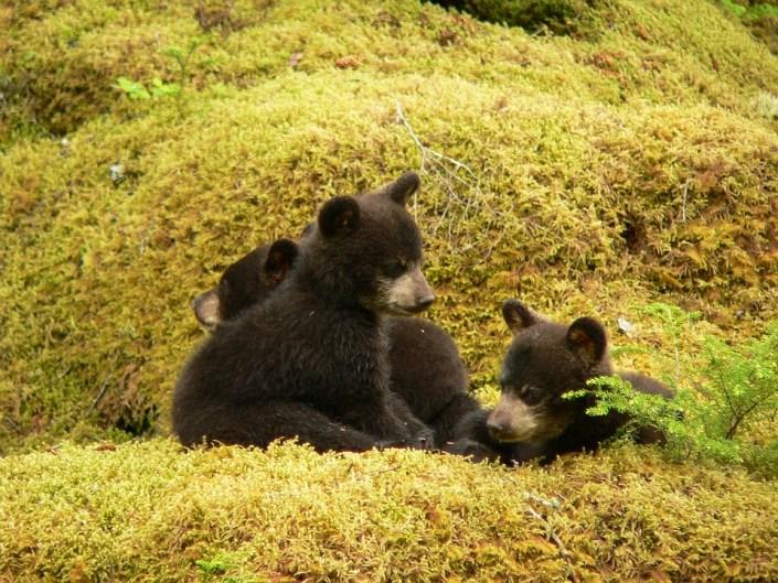Bear family to be killed