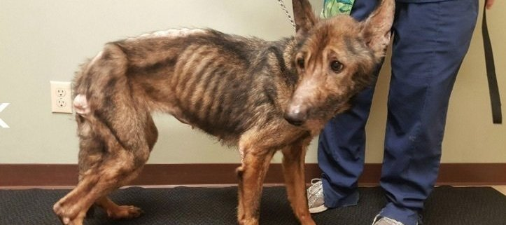 Dogs starved to the brink of death