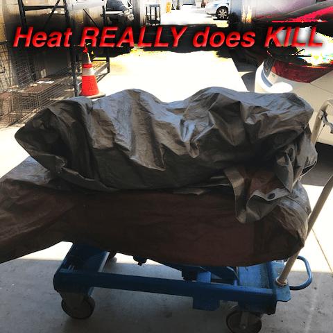 Half dozen dogs die in the heat
