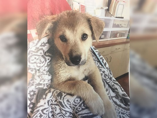 puppy left in parked car while owner went shopping
