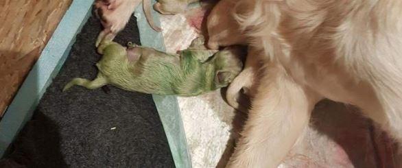 Green puppy?!