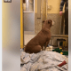 Senior dog longs for someone to notice her