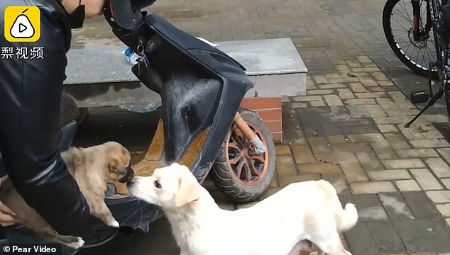 Heartbreaking moment mother dog gives her just adopted puppy one last kiss
