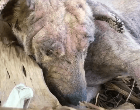 Throwaway dog slept next to her home for a year until she almost died • Pet Rescue Report