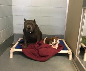 Blind dog and guide need a new family