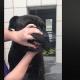 Blind homeless senior dog