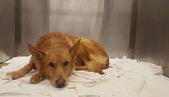 Dog had genitalia removed to save his life